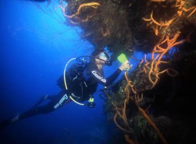 Korallenbarrieren