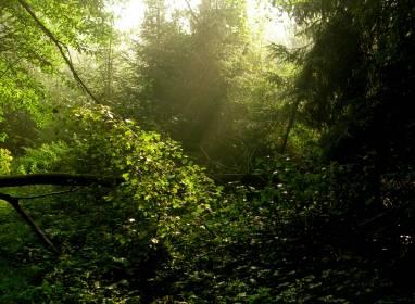 Atractivos en Cayo Guillermo: Naturschutzpark El Bagá