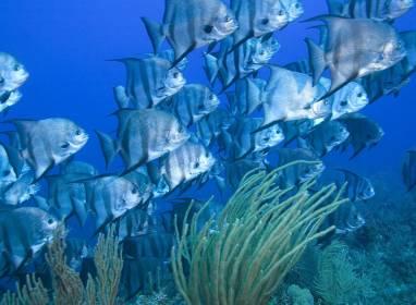 La barrière de corail de Jardines del Rey
