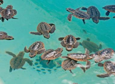 Atractivos en Cayo Largo: Turtle Breeding Centre
