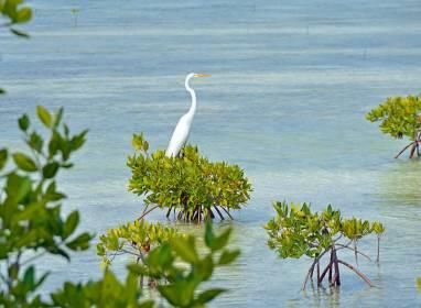 Atractivos en Cayo Santa María: La biodiversité