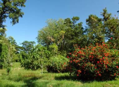 Atractivos en Сьенфуэгос: Ботанический сад