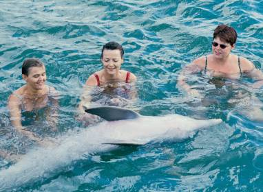 Atractivos en Holguín: Swimming with dolphins