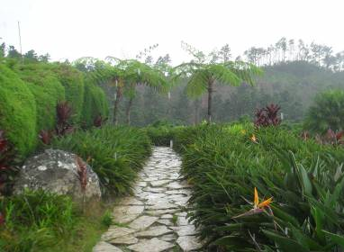 Ave del Paraíso Botanical Garden