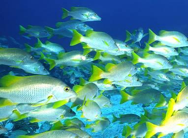Atractivos en Varadero: Diving in Varadero