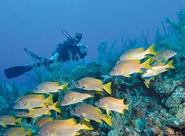Atractivos en Varadero: Playa Coral