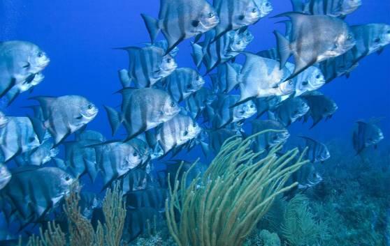 Barreira de corais de Jardines del Rey
