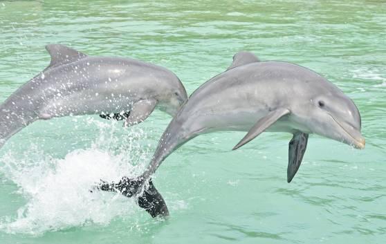 Dolphin Pool in Holguín