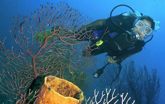 Sol Sirenas Coral - Buceo