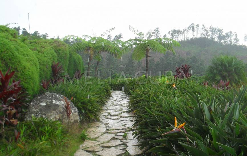 Botanischer Garten Ave del Paraíso
